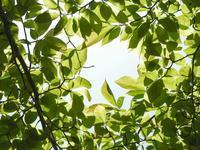 新緑の中で - 写真撮り隊の今日の一枚2
