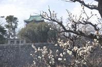 大阪城の梅と駅前パーラー♪ - a&kashの時間。