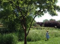時には瞑想でリフレッシュを - 花の自由旋律