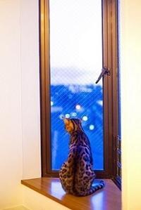 西沢杏子さん「窓」 - 牧野節子の部屋