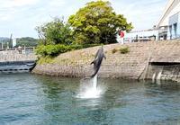 イルカ水路でマンボウに出逢ったぁ - おでかけメモランダム☆鹿児島