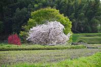 明日香村岡 - ぶらり記録 2:奈良・大阪・・・