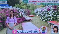 関西テレビ「報道ランナー」三室戸寺境内「花の茶屋」の「つつじフロート」が紹介されました。 - 【飴屋通信】 京都の飴工房「岩井製菓」のブログ