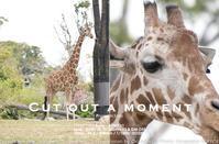 動物園とカメラと。sony α1の「BIONZ XR(ビオンズ エックスアール)」は8倍速エンジン全開で瞳AF外さないんですって! 作例#α1 #a1 #カメラ#写真 - さいとうおりのお気に入りはカメラで。