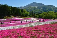 ◆ 「芝桜の丘」へ行った日(2021年4月) - 空とグルメと温泉と