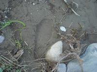 半年前は熊が歩いていた河川敷にて - 「 ボ ♪ ボ ♪ 僕らは釣れない中年団 ♪ 」Ver.1