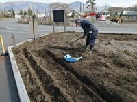 芝桜を育てます♪ - もの作りの裏側 太陽電機株式会社ブログ