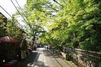 深大寺・初夏の緑 - 柳に雪折れなし!Ⅱ