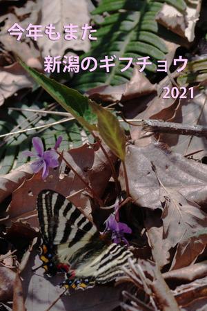 今年もまた 新潟のギフチョウ - 還暦からのネイチャーフォト