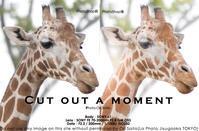 動物園とカメラと。トリミング&レタッチ前後 #a1 #α1 #PhotoShop #Adobe #SEL70200GM - さいとうおりのお気に入りはカメラで。