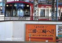 葉が目立つ頃 『三浦海岸河津桜 2021』㉑ - 写愛館