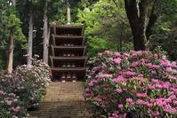 シャクナゲの咲く室生寺宇陀市 - 峰さんの山あるき