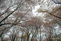 丸山公園 - toshi の ならはまほろば