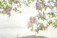 薄紅色の。 - Yuruyuru Photograph