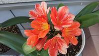 春のお花色々 - Ree's Blog