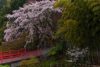 2021桜咲く京都 西山・正法寺の春 - 花景色-K.W.C. PhotoBlog
