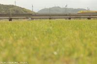 春は出会いの季節 - PTT+.