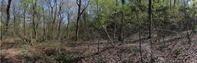 2021.4.15新潟県・カタクリの大群落ギフチョウ(1)2021.4.26(記) - たかがヤマト、されどヤマト