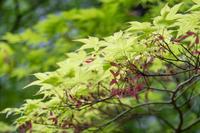 「如月の頃ー京都西山のあたり-」 - ほぼ京都人の密やかな眺め Excite Blog版