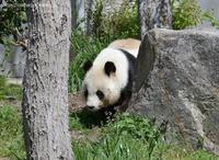 2021年3月王子動物園2その4 - ハープの徒然草