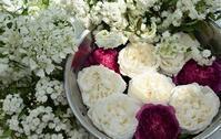 続バラの開花② - バラとハーブのある暮らし Salon de Roses