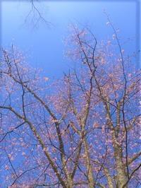 寒くても良い点は 山桜の開花期が伸びるんじゃない?と期待できるところ - 小さな森の小さな家