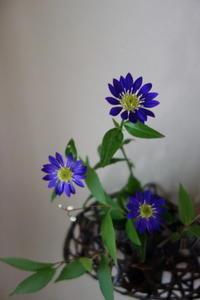 お庭のお花を楽しむ - g's style day by day ー京都嵐山から、季節を楽しむ日々をお届けしますー