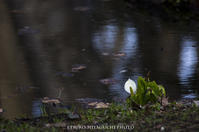 池のほとりに水芭蕉 - ekkoの --- four seasons --- 北海道
