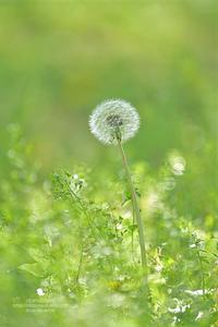 心の置き場所 - お花びより