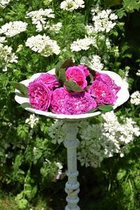 続バラの開花③ - バラとハーブのある暮らし Salon de Roses