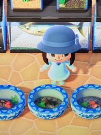 金魚 - おうちやさい