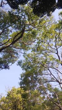 薫風31 - 萩セミナーハウスBLOG