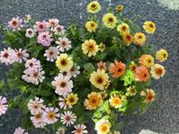 暑さに負けない夏のど定番入荷しました♪ - 花温♪ の花話