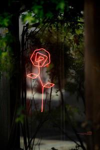 一輪の薔薇 - purebliss