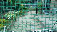 「うちの庭」もうすぐ若葉の季節(2021.04.27) - nabetatu52のブログ「ゆっくり・ゆったり」