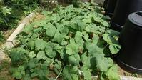 家庭菜園の整理 - ウィズコロナのうちの庭の備忘録~Green's Garden~
