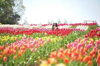 チューリップ畑に行ったよ~~~♪ - Reon with LR & Roses