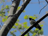 埼玉県県民の森 2021.4.26 - 鳥撮り遊び