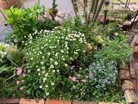 花壇に春のお花を植えてみたよ④ - へい まささん の ひとりごと