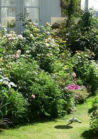 続バラの開花④ - バラとハーブのある暮らし Salon de Roses