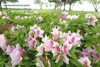 春の日の琵琶湖散歩 - おばちゃんとこのフーフー(夫婦)ごはん