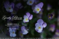 朝の花、蕩ける流れる。SIGMA 35mm F1.4 DG DN | Art + sony α7RIV 作例 #SIGMA #レンズ - さいとうおりのお気に入りはカメラで。