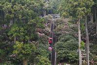 シャクナゲの咲く丘弁財天石楠花の丘 - 峰さんの山あるき