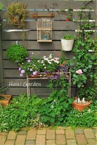 どんどん楽しい半日陰花壇 - ハイジの玄関先ガーデン エピソード2♪