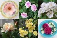 Garden Story「実録!バラがメインの庭づくり第16話」がアップ頂きました。 - バラとハーブのある暮らし Salon de Roses