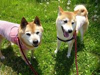 桜とabby&zack 17 - abby & zack 2