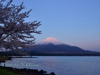 桜と富士山2 - View in mind