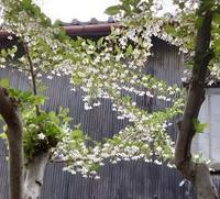 庭仕事 - うまこの天袋