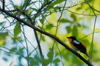 秋ヶ瀬公園・ピクニックの森 2021.4.28 - 鳥撮り遊び