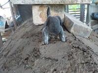 窯を焚きました(No.350) - 薪窯冬青 犬と山暮らし